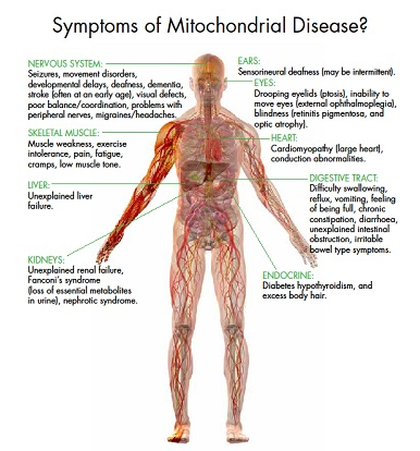 Diagram showing possible symptoms of mitochondrial disease